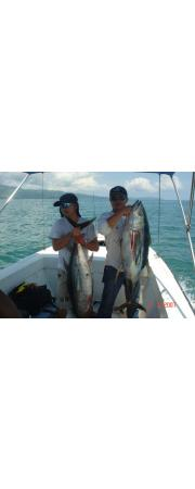 POPPING YELLOWFIN TUNA